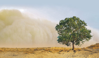Analysis of Sand and Dust Storms (SDS) between the years 2003 and 2016 in the Middle East
